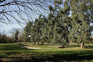 Fulwell Golf Course - Fulwell Golf Course