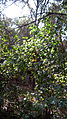 Garden Way - Wall - trees - streamlet - 17 Shahrivar st - Nishapur 13.JPG