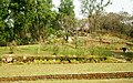 Garden on the backyard of the Healh Center - panoramio.jpg