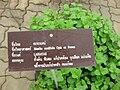 Gardenology.org-IMG 7831 qsbg11mar.jpg
