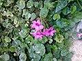 Gardens in Baghdad 15.jpg