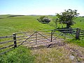 Gate and field boundary near Scrainton - geograph.org.uk - 1331979.jpg