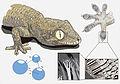 Gecko's secret power - Matteo Gabaglio.jpg