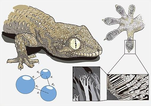 Gecko's secret power - Matteo Gabaglio