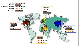 1000 Genomes Project - Changes in the number and order of genes (A-D) create genetic diversity within and between populations.