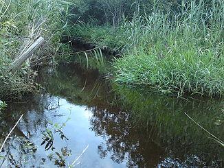 Die junge gennach im gennachmoos südöstlich von biessenhofen
