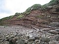 Geological faults on Heysham Head cliffs - geograph.org.uk - 535968.jpg