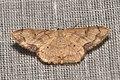 Geometridae (15872007087).jpg