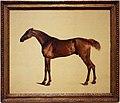 George stubbs, pangloss, 1762 ca. cavallo 01.jpg