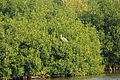 Gfp-florida-everglades-national-park-bird-in-trees.jpg