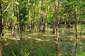 Gfp-missouri-route-66-state-park-swamp.jpg