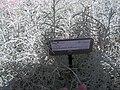 Giardino botanico di Brera (Milan) 311.jpg