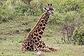 Giraffe (10829417194).jpg