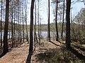 Gmina Narol, Poland - panoramio (1).jpg