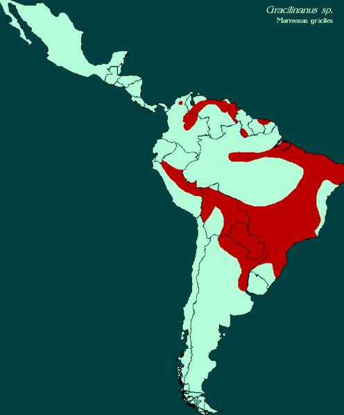 dónde-habitan-las-marmosas