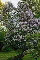 Gradina Botanica (8739590252).jpg