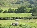 Granite erratics, Strath Rusdale - geograph.org.uk - 903098.jpg