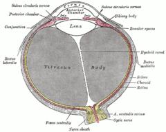 musculo recto interno del ojo definicion
