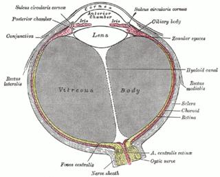 Fibrous tunic of eyeball