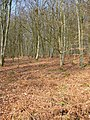 Great Wood - geograph.org.uk - 383699.jpg