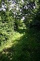 Green lane near Tittleshall - geograph.org.uk - 504964.jpg
