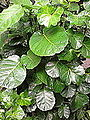 Green leaves 01.jpg