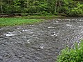 Greenbrier River (downstream from Durbin, West Virginia, USA) 4 (27781558485).jpg