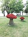 Grzybki rabaty w parku przy jeziorze Ełk.jpg