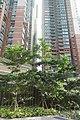 HK 調景嶺 Tiu Keng Leng Metro Town n trees Dec-2017 IX1.jpg