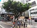 HK Tram 92 view 灣仔 Wan Chai 莊士敦道 Johnston Road October 2019 SS2 48 Chinese Banyan tree.jpg