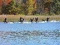 Ham Lake, MN 55304, USA - panoramio (23).jpg