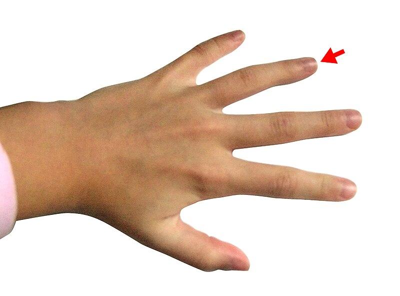 File:Hand - Ring finger.jpg