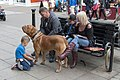 Handcuffing the dog (9703337248).jpg