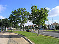 Havering Road, Collier Row, Romford, Essex - geograph.org.uk - 34893.jpg