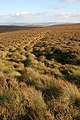 Heather moorland at Foulburn Gair - geograph.org.uk - 1021119.jpg