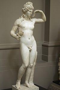 Hermaphroditus lady lever.jpg