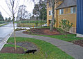 High point tree preserving sidewalk (4574407823) (2).jpg