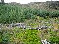 Hillside in Loch Ard Forest - geograph.org.uk - 1056437.jpg