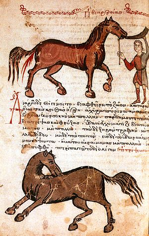 Hippiatrica - Folio from the Hippiatrica with written and illustrated instructions on drenching a horse to induce diarrhea.