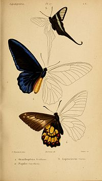 HistoireNaturelleInsectes.SpeciesGénéralLépidoptéresPlate17.jpg