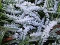 Hoar frost near Griffin Lane - geograph.org.uk - 1609477.jpg