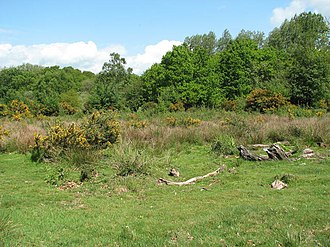 Hoe Rough - Image: Hoe Rough Nature Reserve geograph.org.uk 1310180