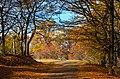 Hoia toamna-Hoia Forest autumn 2012 - panoramio.jpg
