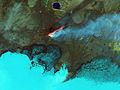 Holuhraun False Color OLI Landsat 8 01.jpg