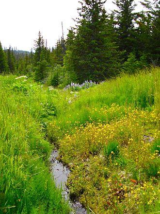 Diamond Ridge, Alaska - The Homer Demonstration Forest
