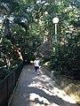 Hong Kong Zoological and Botanical Gardens 21.jpg