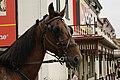 HorseCV.jpg