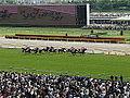Horse racing @ Tokyo Race Course @ Fuchu (14120920955).jpg