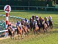 Horseracing arima-kinen 2007.jpg