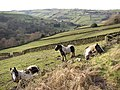 Horses and view of the valley, Stainland - geograph.org.uk - 692423.jpg